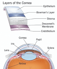 Cornea illustration